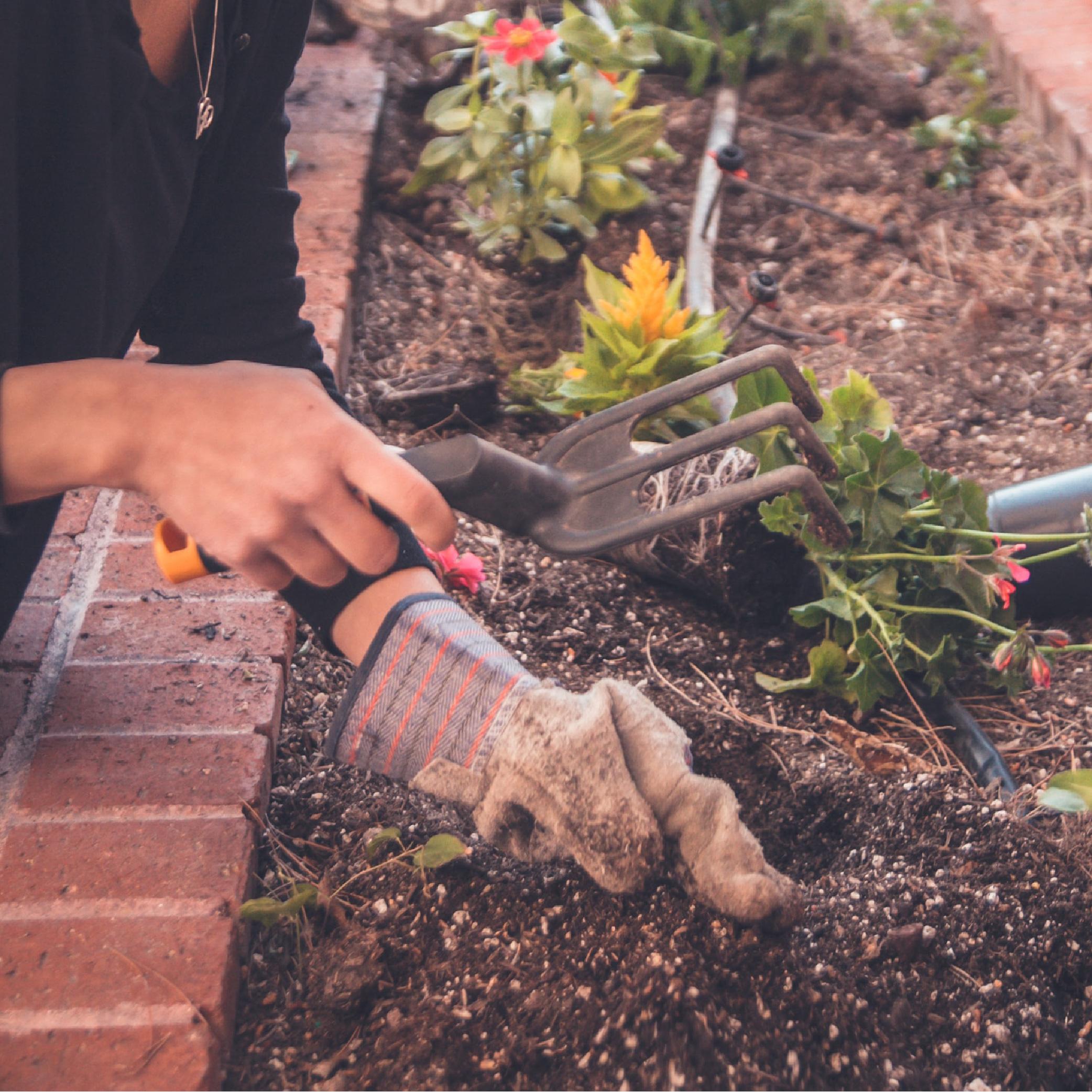 Un potager sur sa terrasse ou dans son jardin