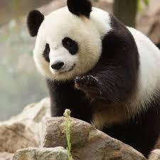 Vivez une journée magique au Zoo de Beauval avec vos enfants