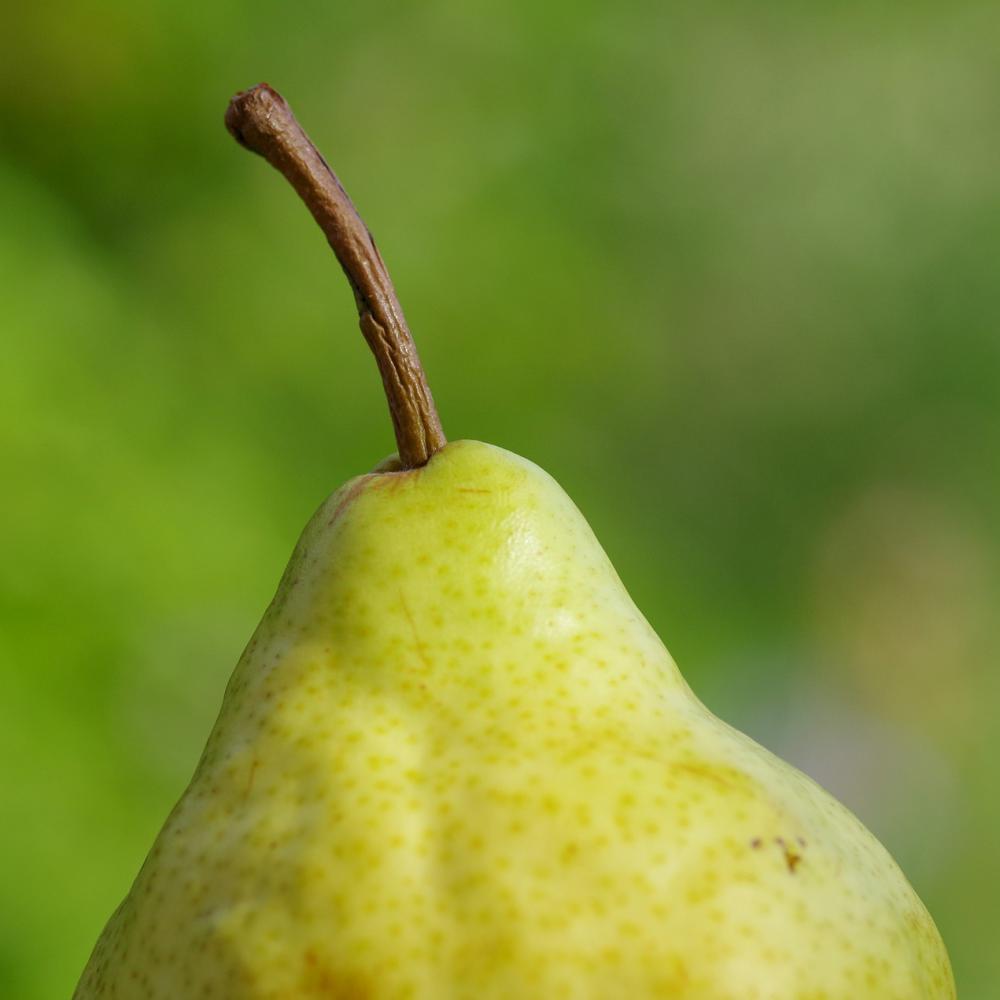 Panna cotta de poires et chantilly aux noix caramélisées